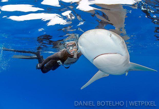Debra canabal modeling for me with an esplendid shark  (1)