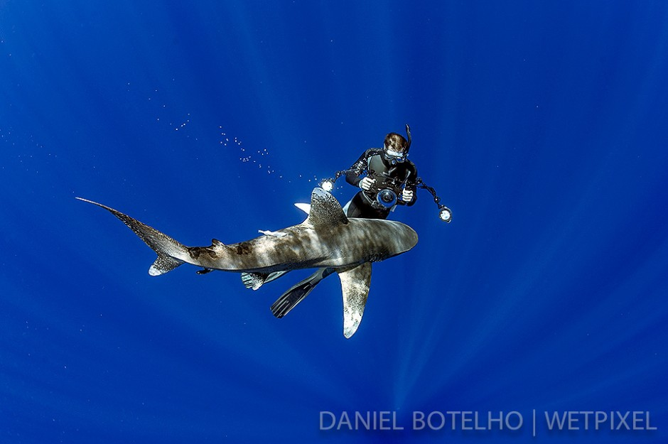 Vincent Canabal and oceanic white tip.