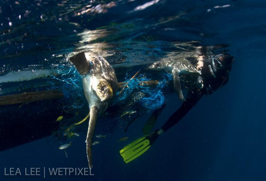 Cutting the fishing net carefully.