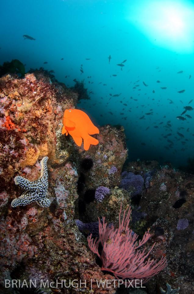 Reef at Farnsworth Banks, Catalina Island, California.