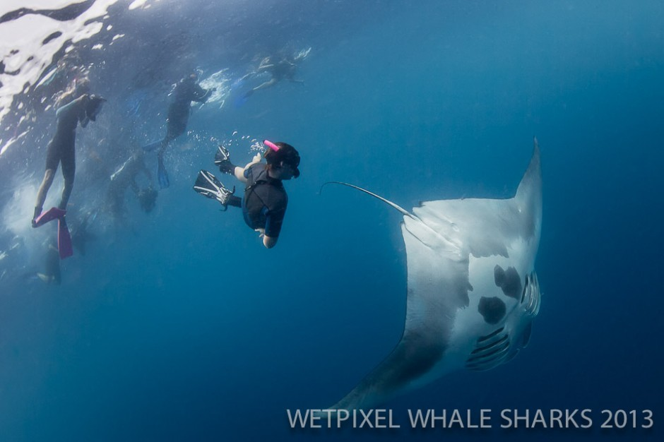 Zac Polmanteer: 14 year old Riley Polmanteer swims down to get a closer view of a manta feeding.