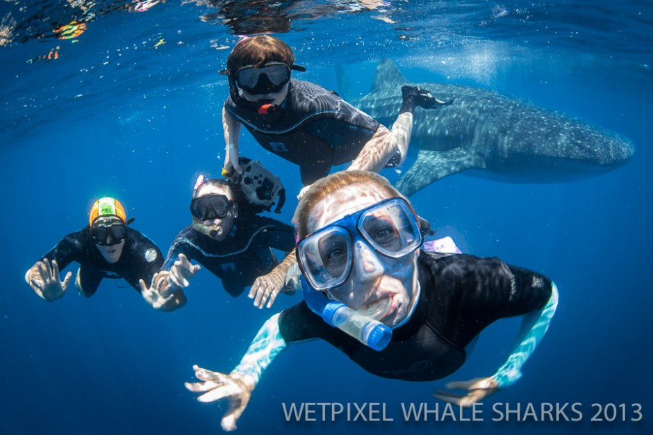 Erin Quigley: Swimming with Whale Sharks is a fantastic family adventure.