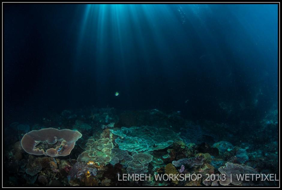 Sunbeams on corals by Julian Cohen.