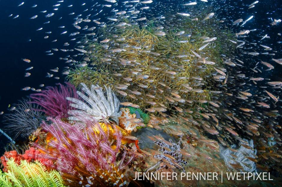 A fish explosion amongst bursting colors.