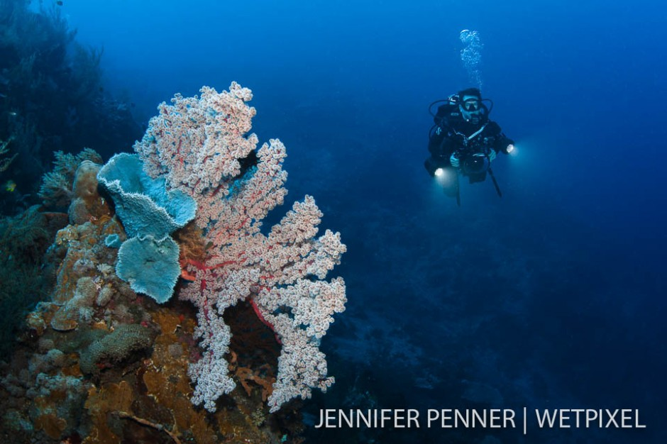 Healthy reefs and good visibility abound in Komodo National Park.