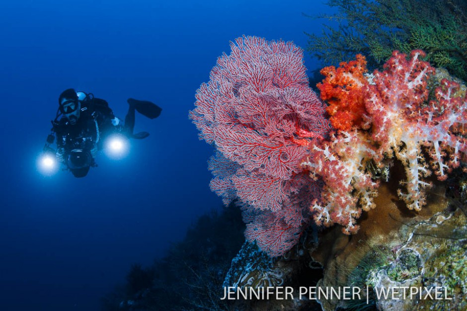 Vibrant colors on the reef contrast the blue water.