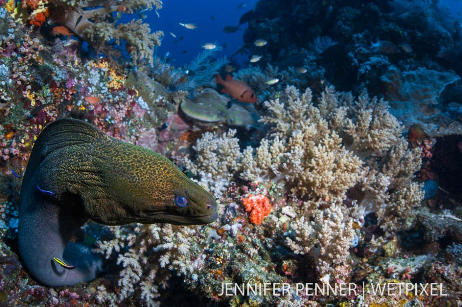 A large green moray eel (*Gymnothorax funebris*)  makes its home on the sloping reef.