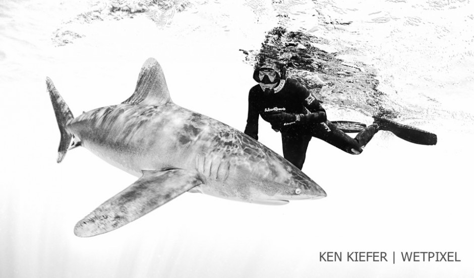 Ken's wife Kimber Kiefer on her first shark encounter,