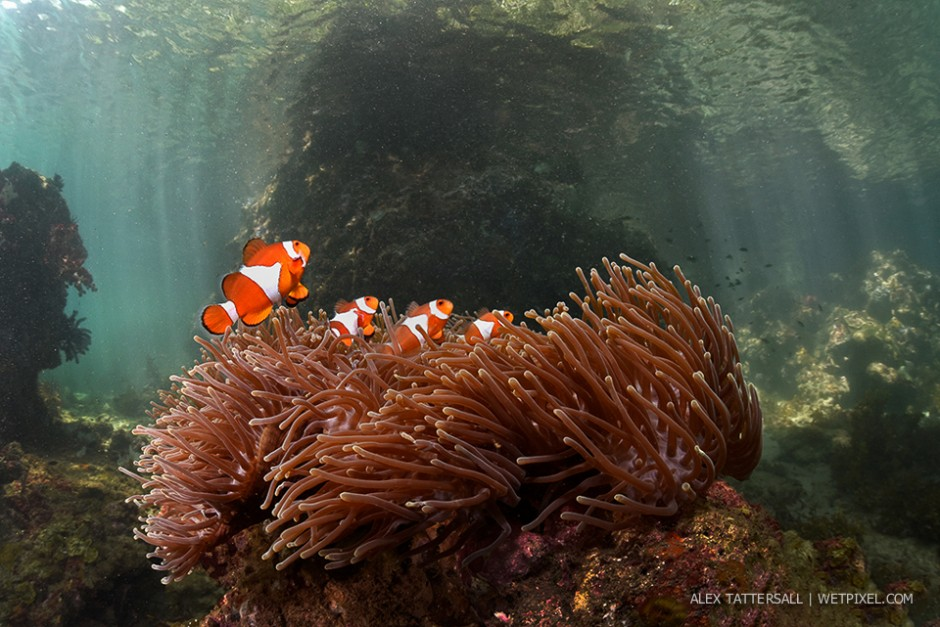 Anemonefish in the Passage. Again very shallow, rich ecosystem, wonderful lighting. Nauticam NA-D750, Sigma 15mm, 140mm minidome.