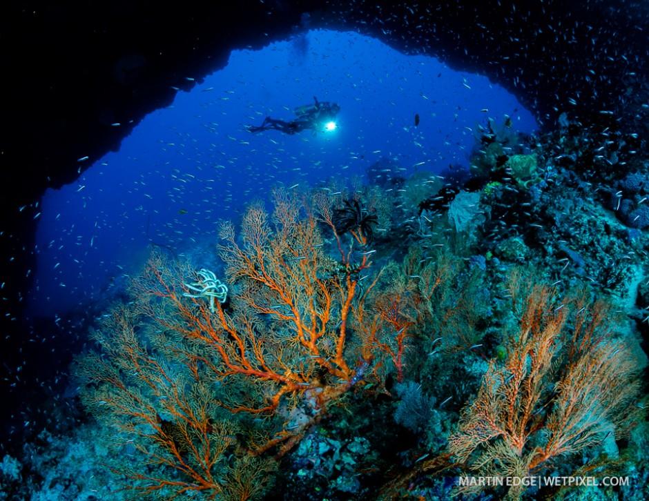 Diver amid corals.