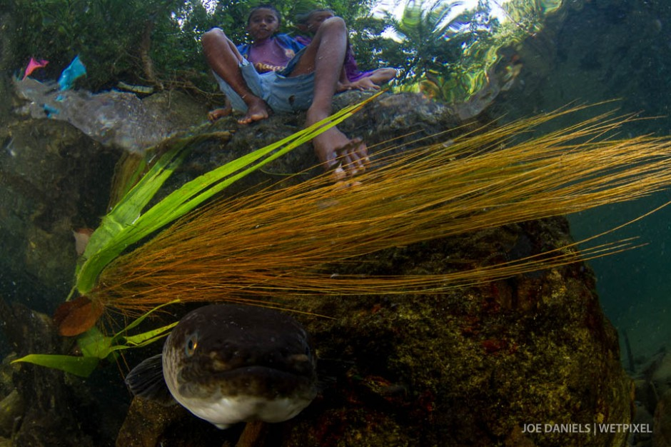 A large fresh water eel and a boy from Larike village peer into my dome port.