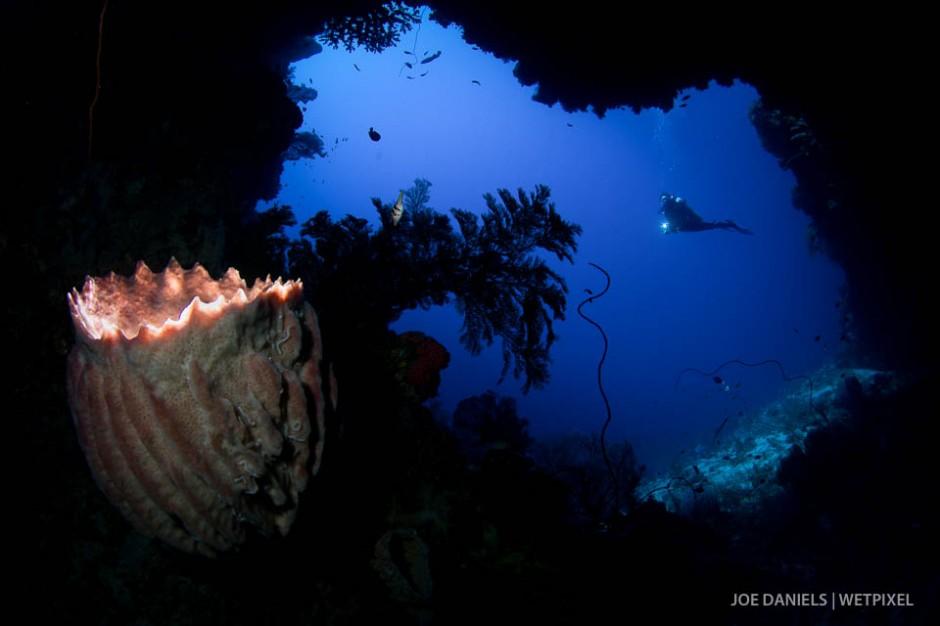 A large barrel sponge (*Xestospongia muta*) inside a cave.