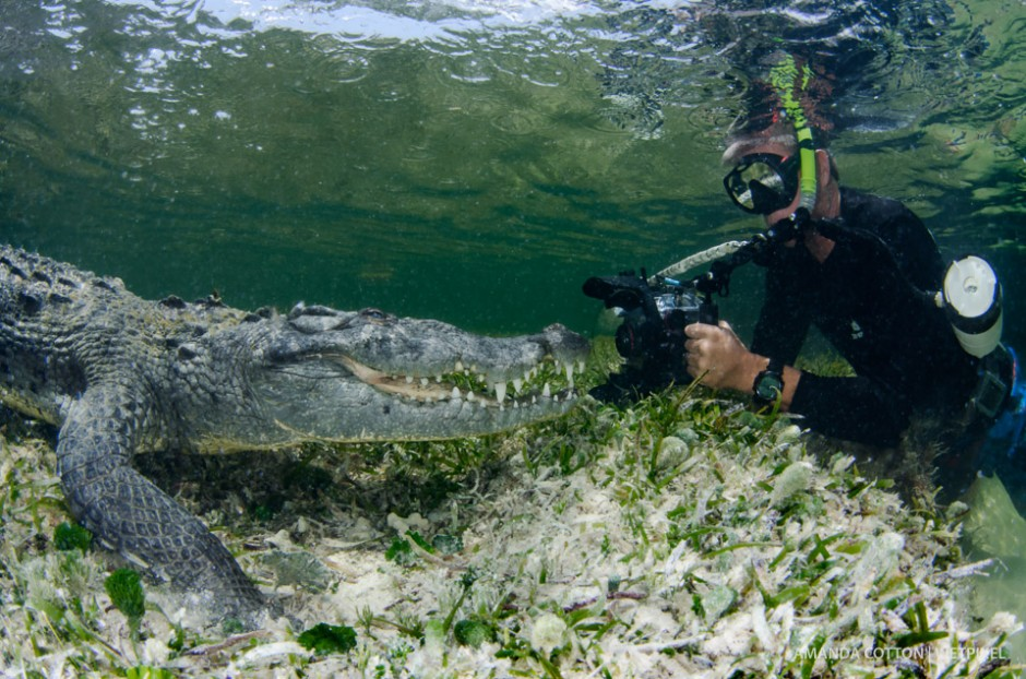 Photographer Ken Keifer captures images of the American crocodile up close and personal.