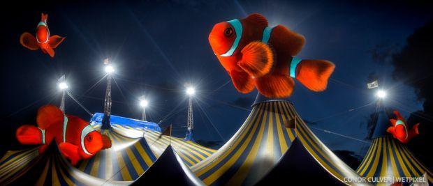 Clownfish circus