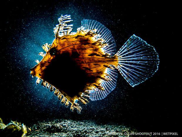 2. richard charlton weedy filefish