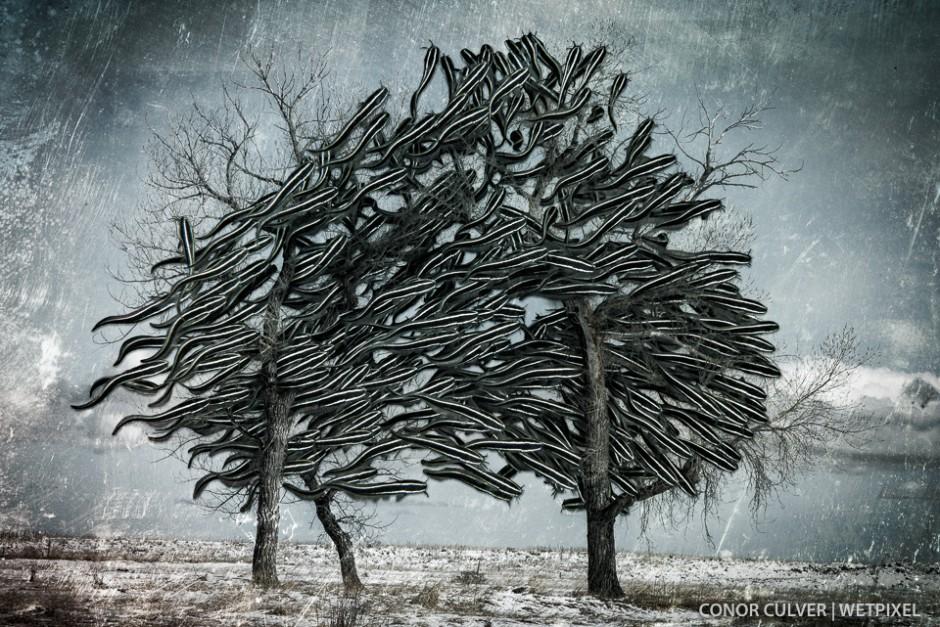 Conor Culver: Underwater Surrealism 2