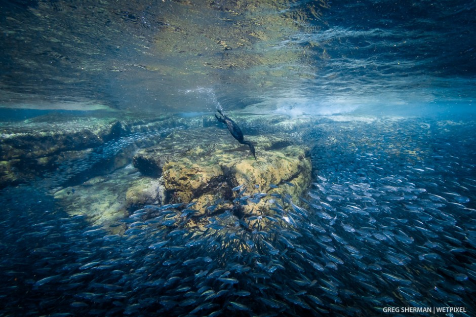 Greg Sherman: Sea of Cortez