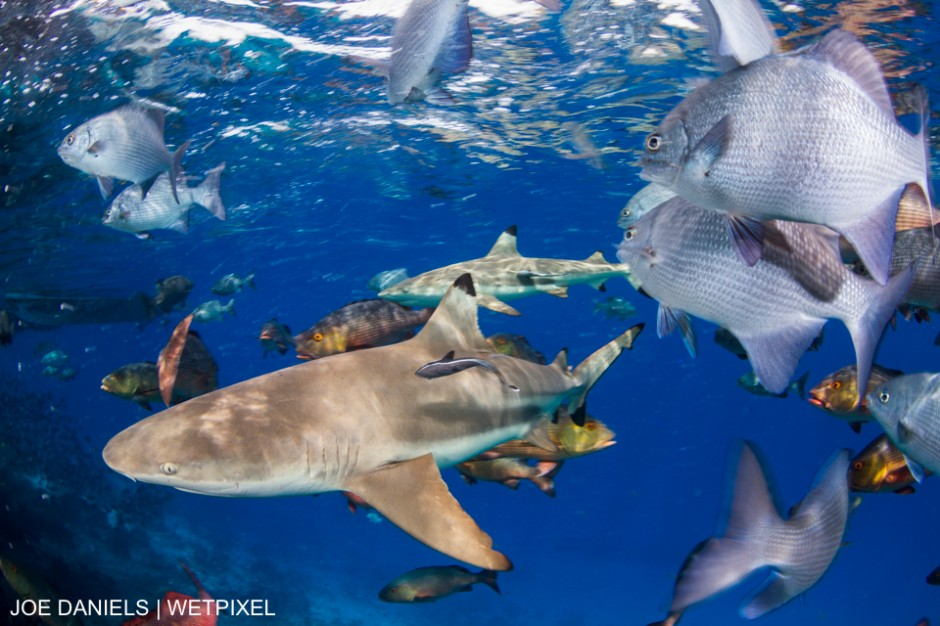 Once home to a former shark finning camp Batbitim island in Misool, Indonesia is now right at the heart of the Raja Ampat shark and ray sanctuary. Joe Daniels