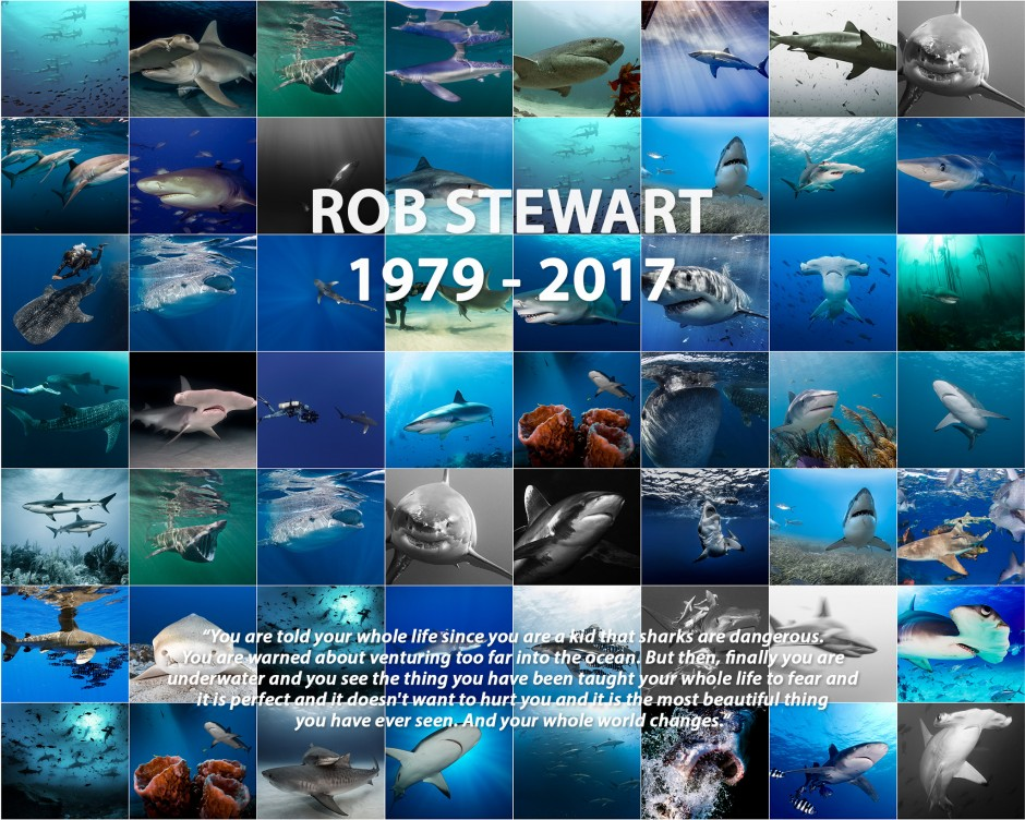A wall of shark imagery in honor of Rob Stewart.
