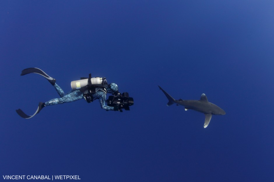 Rob Stewart films an Oceanic Whitetip Shark (Carcharhinus longimanus) off Cat Island in the Bahamas for his upcoming project.  May 2016, Vincent Canabal