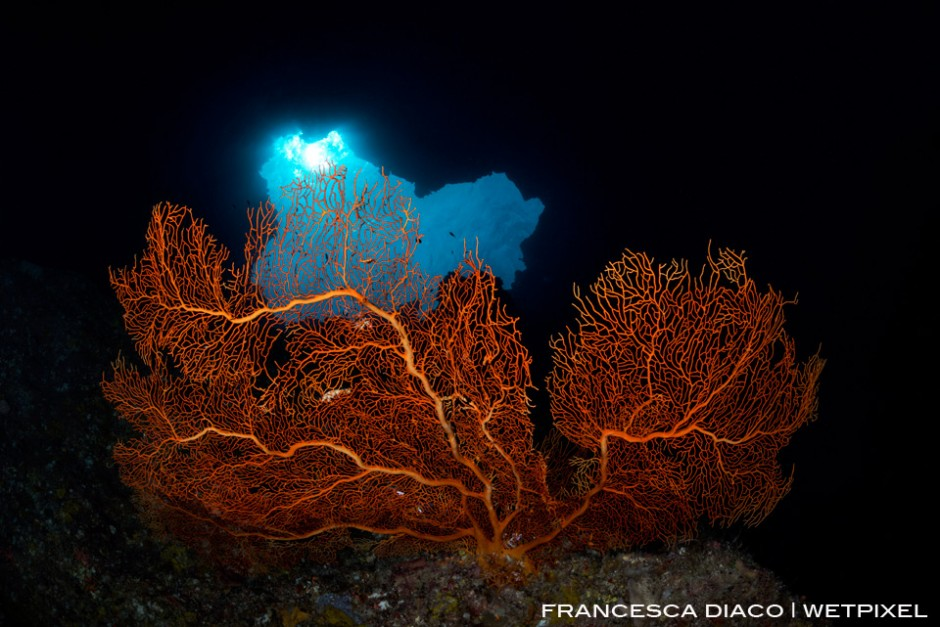 A large Gorgonian Sea Fan provides a colorful focal point inside the cavern at Blue Holes.