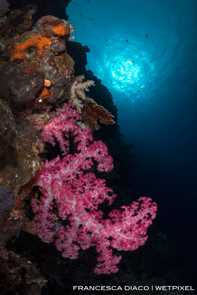 Colorful soft coral and dramatic topography offer a number of excellent wide angle opportunities on the outer wall near Siaes Tunnel.