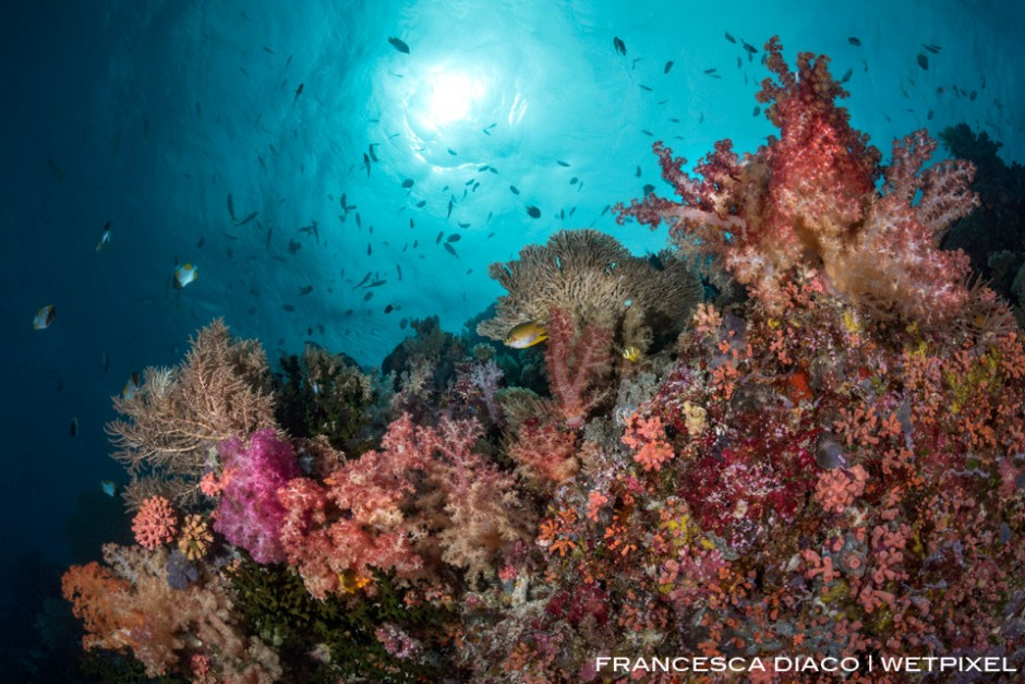 Loads of reef fish and wide variety of hard and soft coral can be found at Big Drop Off and all around Palau's reefs.