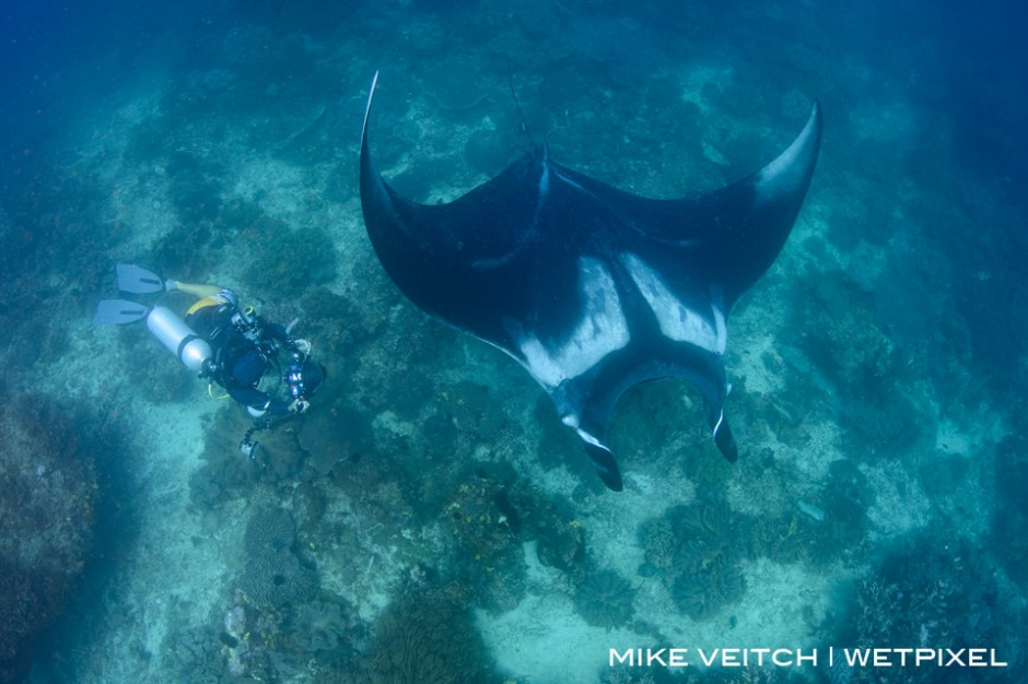 Photographer and Oceanic Manta Ray, *Manta birostris*, Blue Magic, Dampier Strait, Raja Ampat, Indonesia