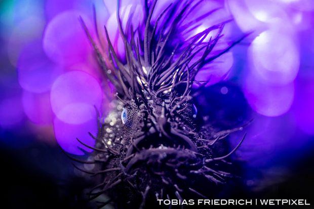 20160527 below surface tobias friedrich  mg 0776  1