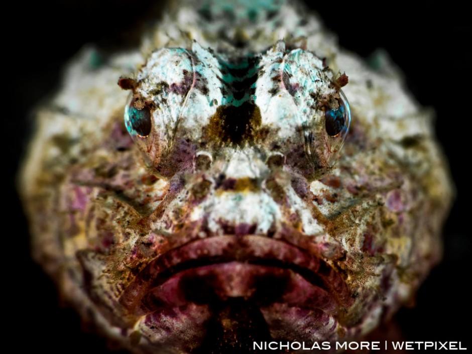 White Devil Scorpionfish (*Scorpaenopsis diabolus*)