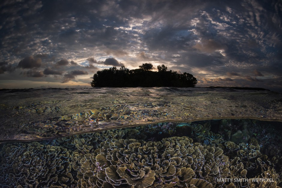 Cabbage coral reef at Sunset. Lissenung Island, PNG.