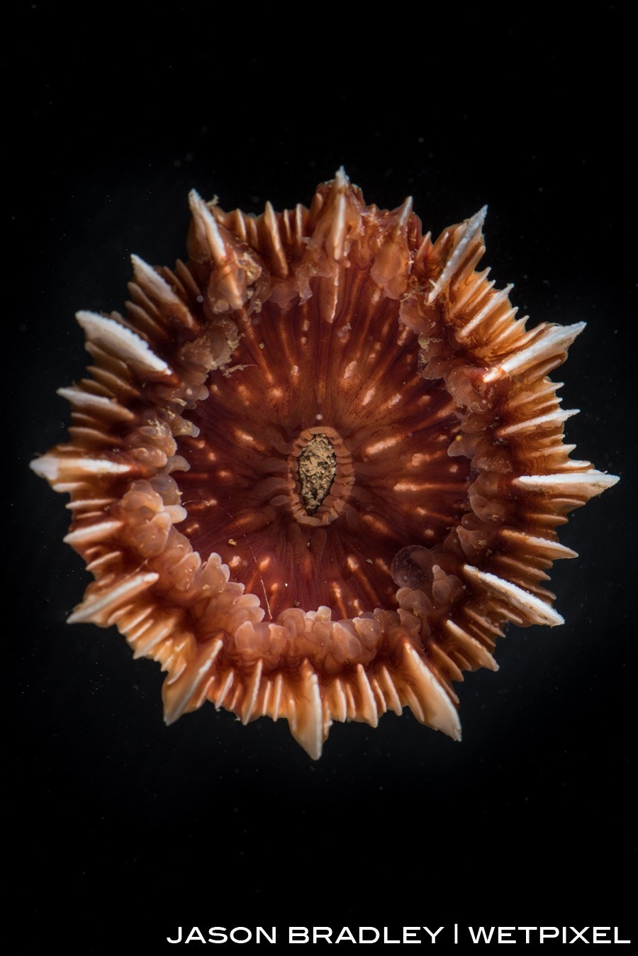 A stony coral (*Scleractinia*) recovered from 2000 meters below.