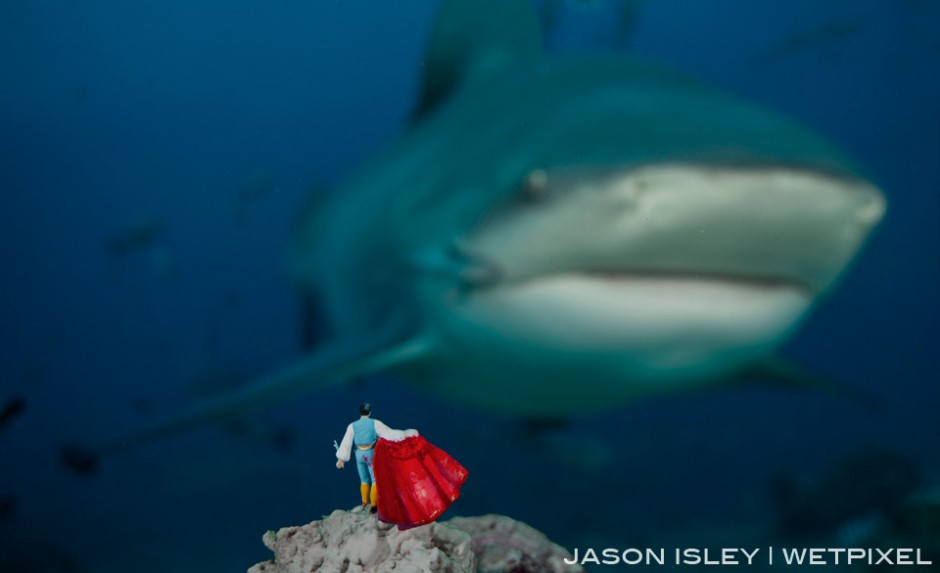 Without the usual bulls to tease the Matador decides to take on the bull shark. (nikon D800, 28-70mm, nauticam WAP port/lens)
