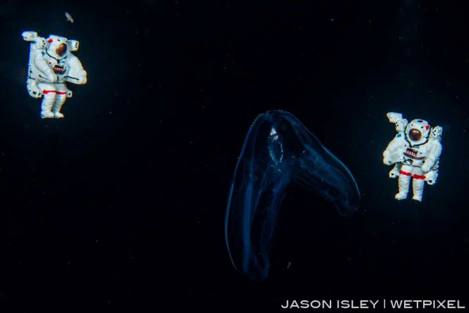The astronauts check out the comb jelly drifting in the Abyss. (nikon D800, 60mm macro, nauticam)
