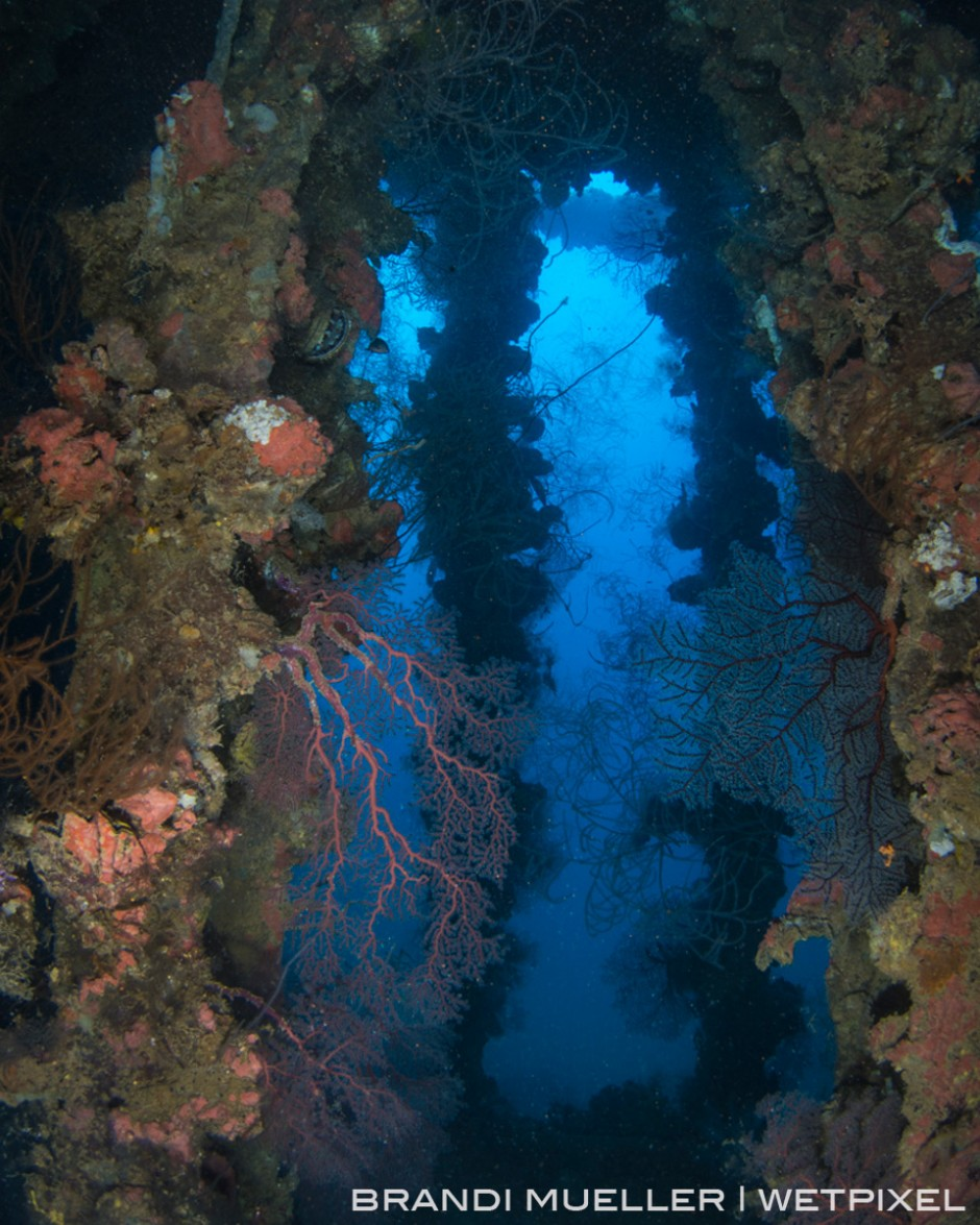 Sea fans and coral have decorated beams over a cargo hold on the Yamagiri Maru.