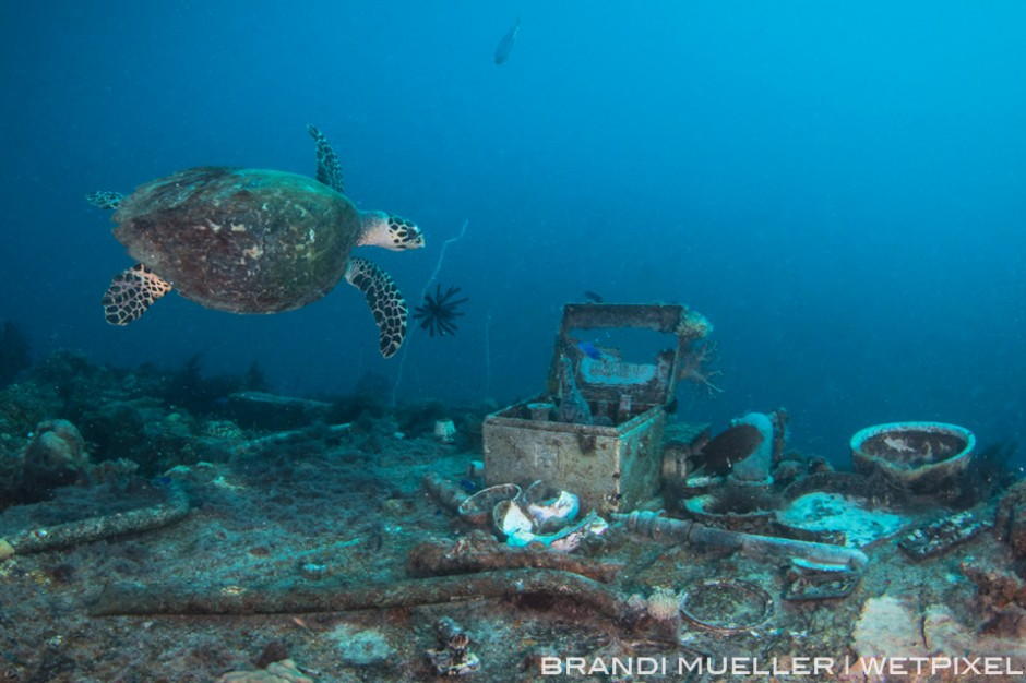 A hawksbill turtle swims over a medical kit and other artifacts found inside the Shinkoku Maru.