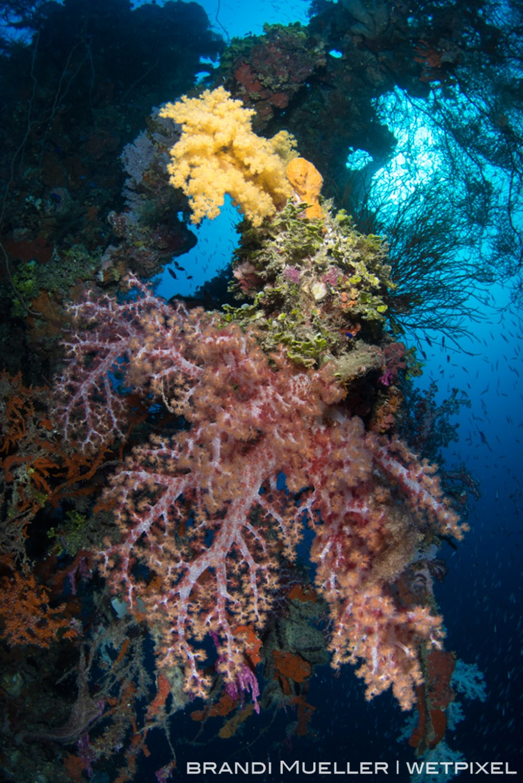 Soft corals draping part of the Shinkoku Maru.