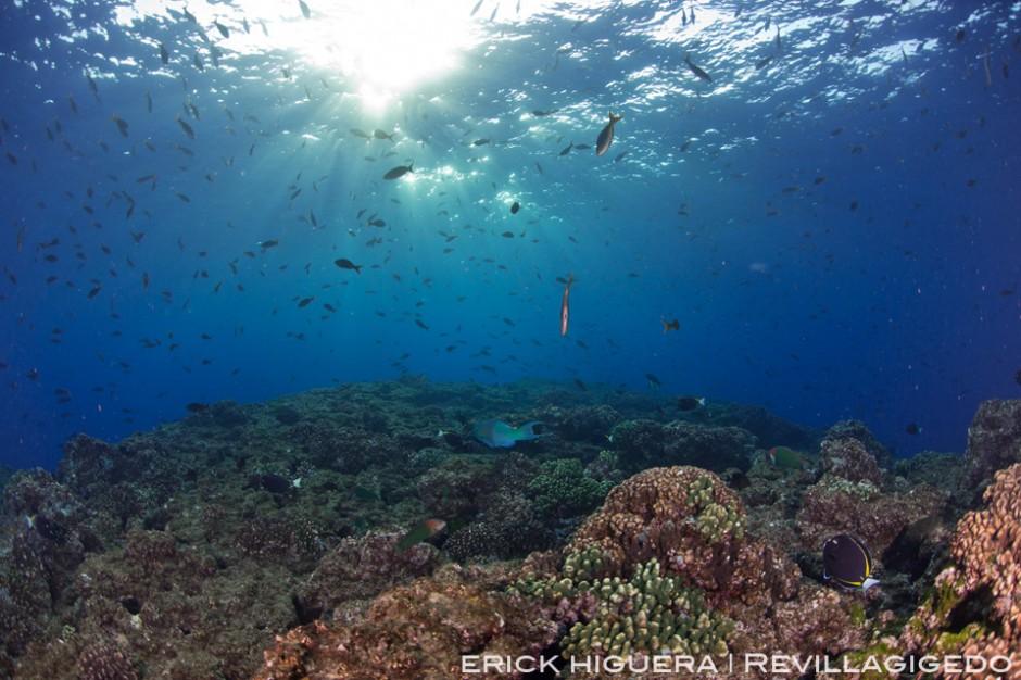 El Boilers Reef San Benedicto