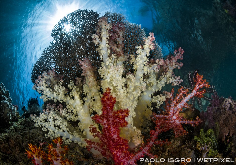 Sunburst in a shallow dive full of soft coral
