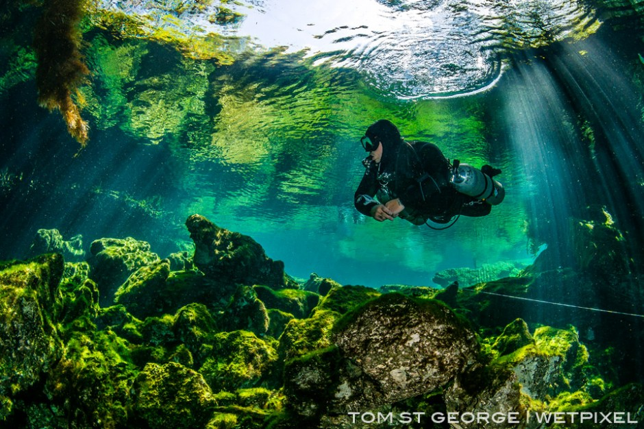 Underwater garden of Cenote Ponderosa.