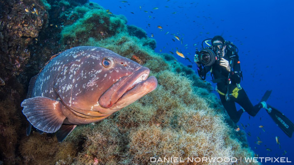 This subject is so co-operative that me and my dive buddy were able to film and photograph it at the same time