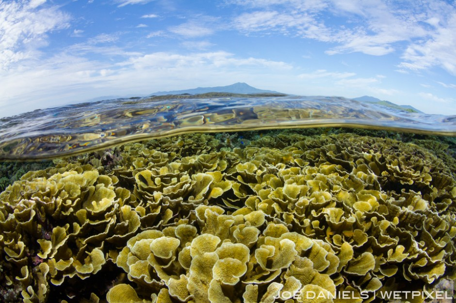 Most of the hard corals around Kimbe Bay are very healthy and diverse which is an icreasingly rare sight around the world.