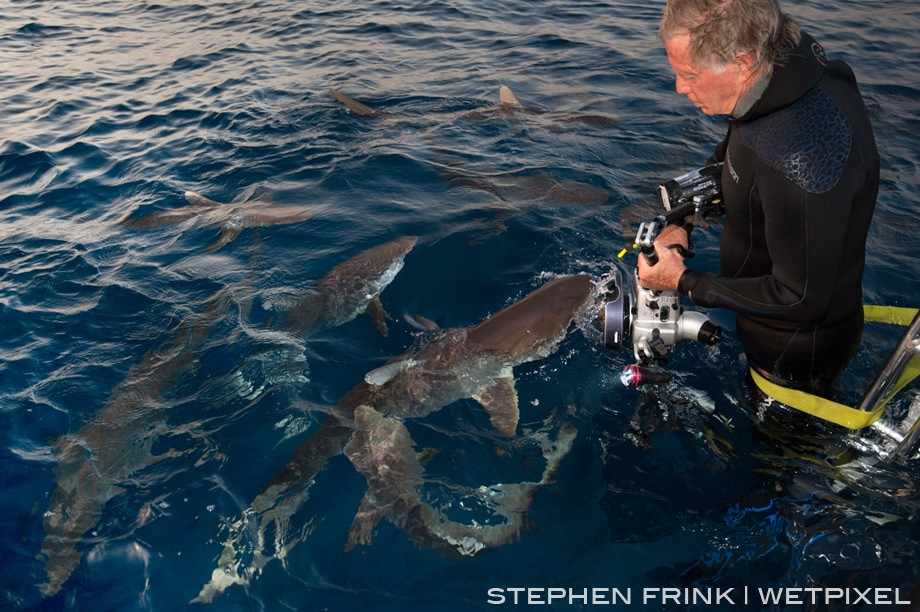 Dennis Liberson captured a shot of Stephen Frink, strapped into the dive ladder, photographing silky sharks at sunset