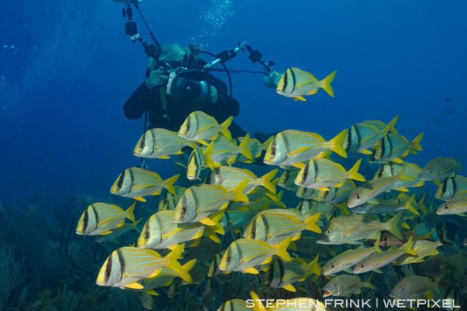 Schools of porkfish and grunts are quite abundant