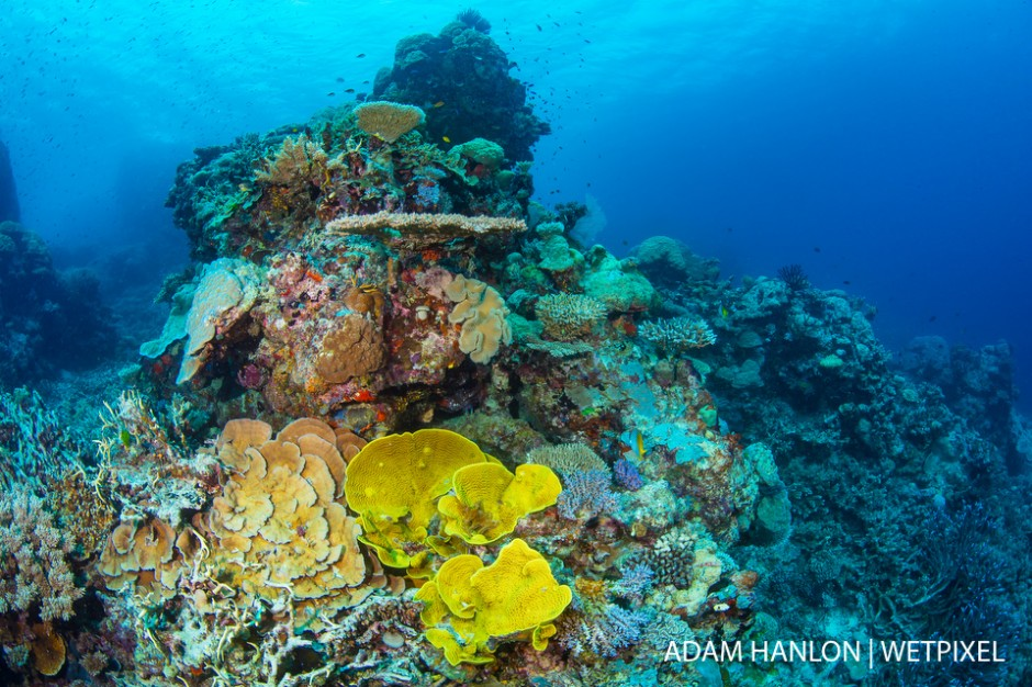 Amazing healthy hard and soft corals at the Coral Kingdom, Ribbon Reefs, Great Barrier Reef