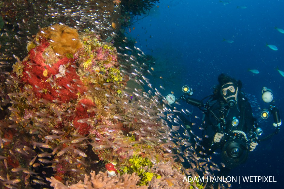 Mike Ball video pro Jemma Craig poses in a school of glass fish on Cracker Jack Reef, Great Barrier Reef