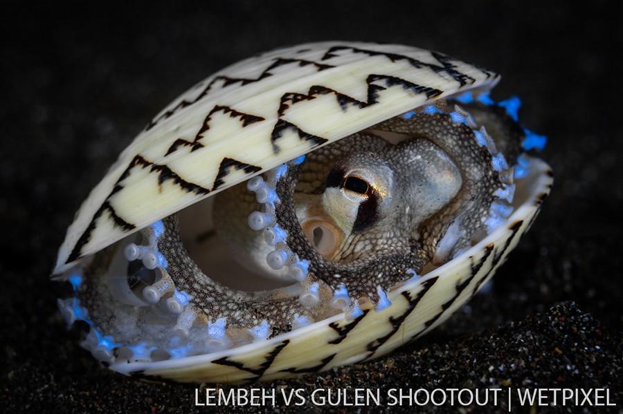 Nick More, Lembeh Indonesia, Fish and Invertebrates