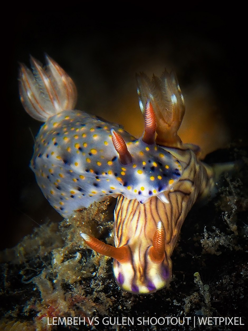 Liz Wagstrom, Lembeh Indonesia, Nudibranchs