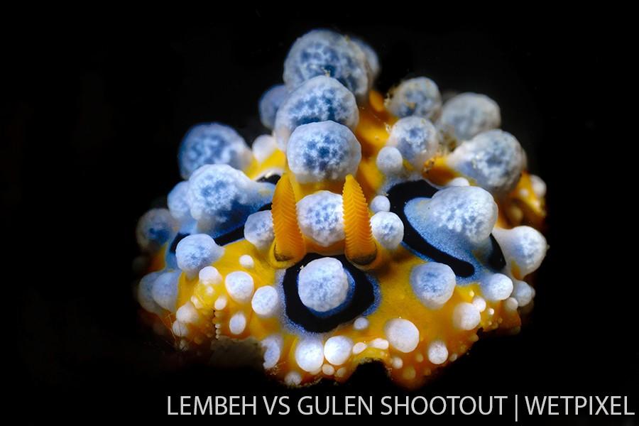 Kellda Ceneno, Lembeh Indonesia, Nudibranchs