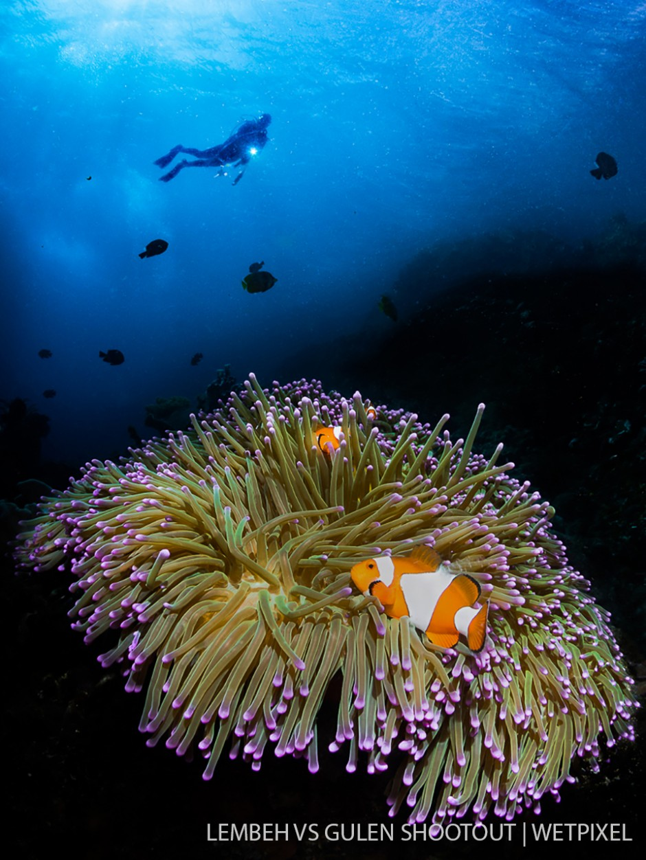 Kirsty Andrews, Lembeh Indonesia, Wide Angle